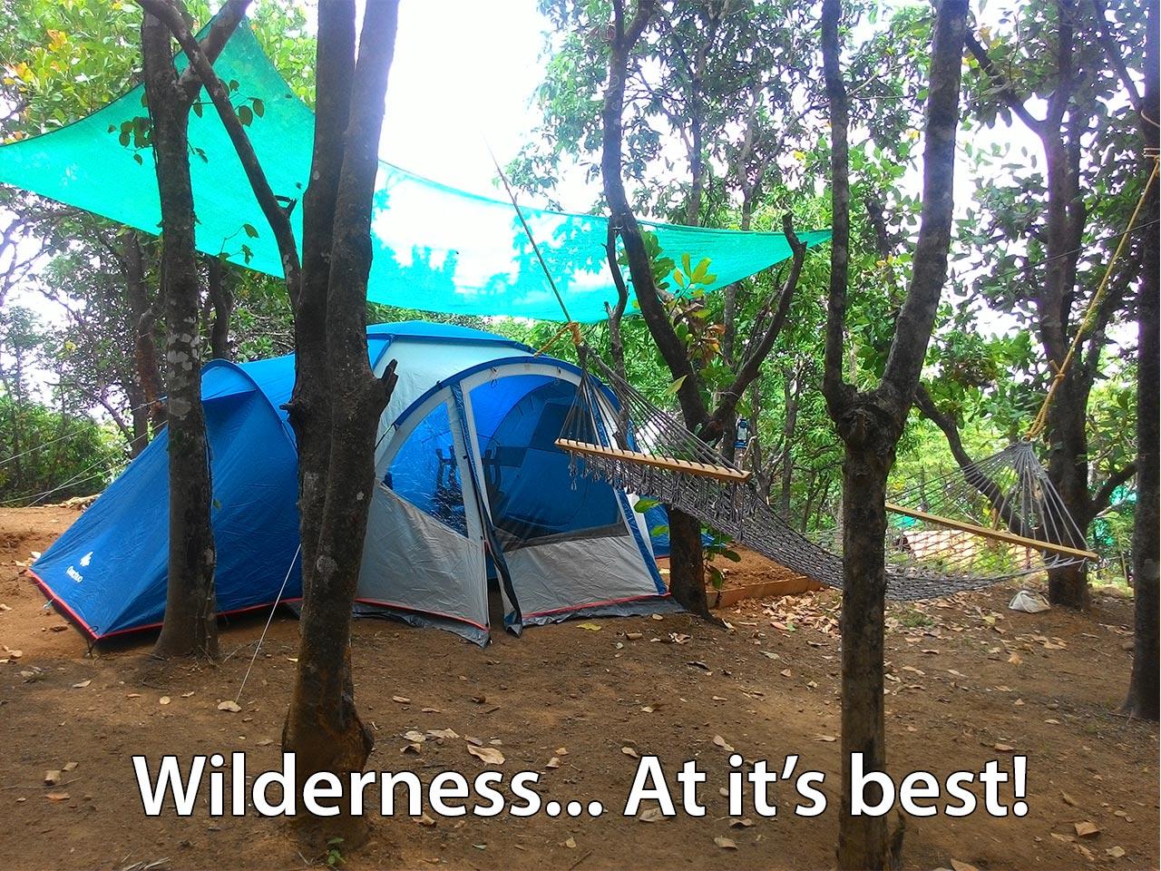 Explore the Wilderness at ReginaSilva